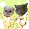 #猫#跨越山河大海来守护你~